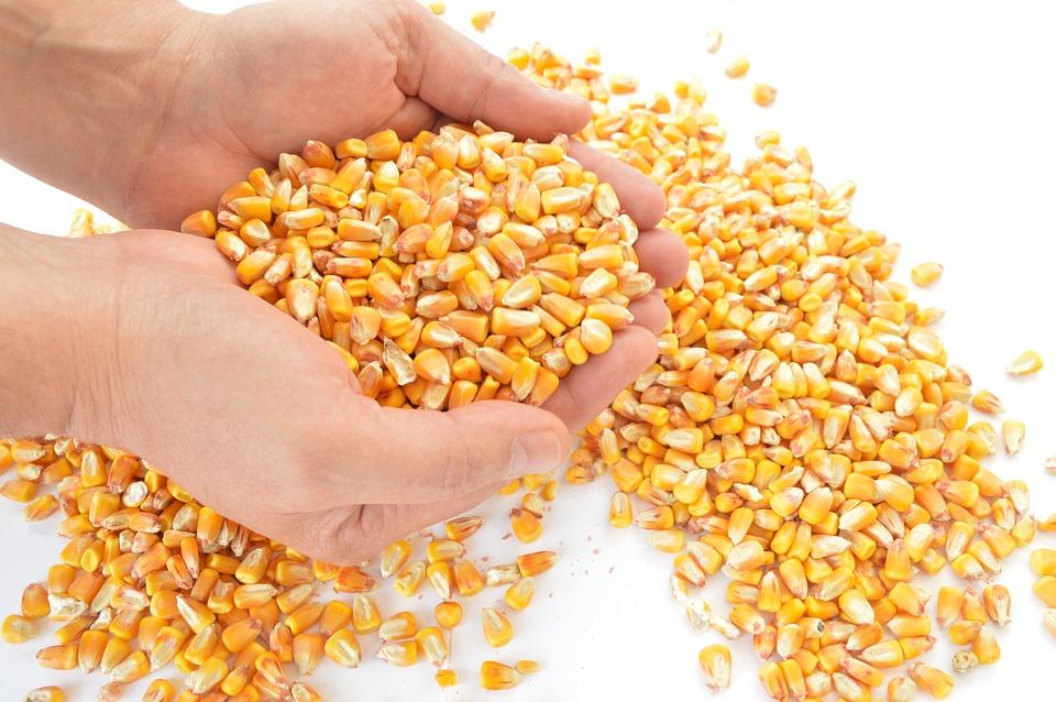 corn-1173816_960_720