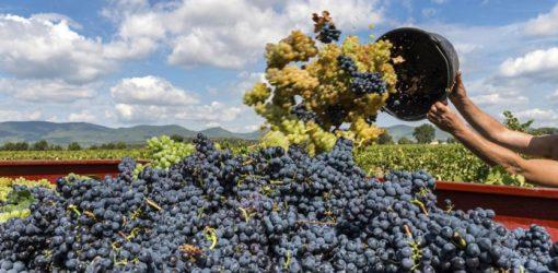 ALIMENTARE_VINO_VENDEMMIA_FOTOLIA-kq4D--835x437@IlSole24Ore-Web periti agrari milano